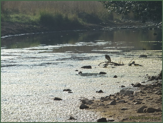 waterbirds at ranthambore